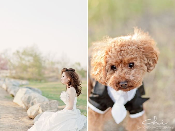 Los Angeles cherry blossom puppy poodle Engagement Photo 019