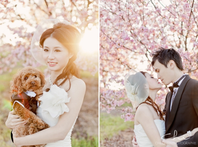 Los Angeles cherry blossom puppy poodle Engagement Photo 023