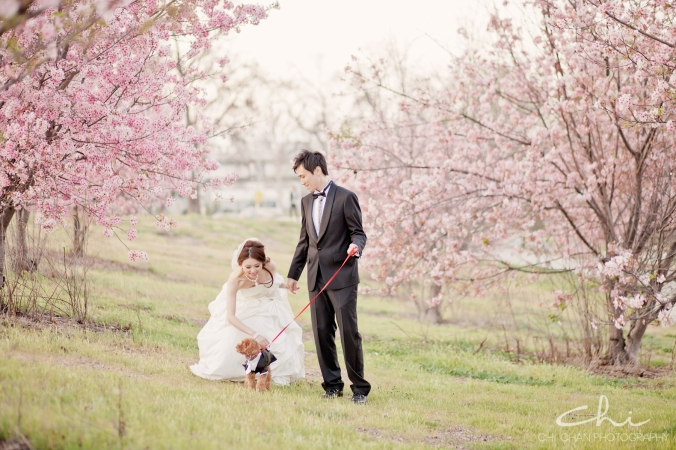 Los Angeles cherry blossom puppy poodle Engagement Photo 032