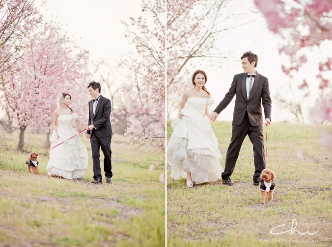 Los Angeles cherry blossom puppy poodle Engagement Photo 034