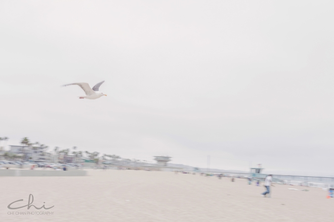 TK Eng 19 los angeles engagement Veniece Beach